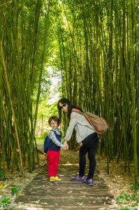 bambou - l'île verte - Châtenay-Malabry